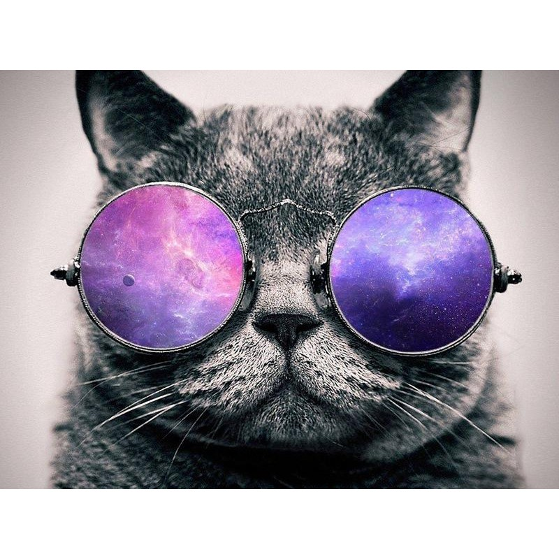 Cat With Glasses 5D ...