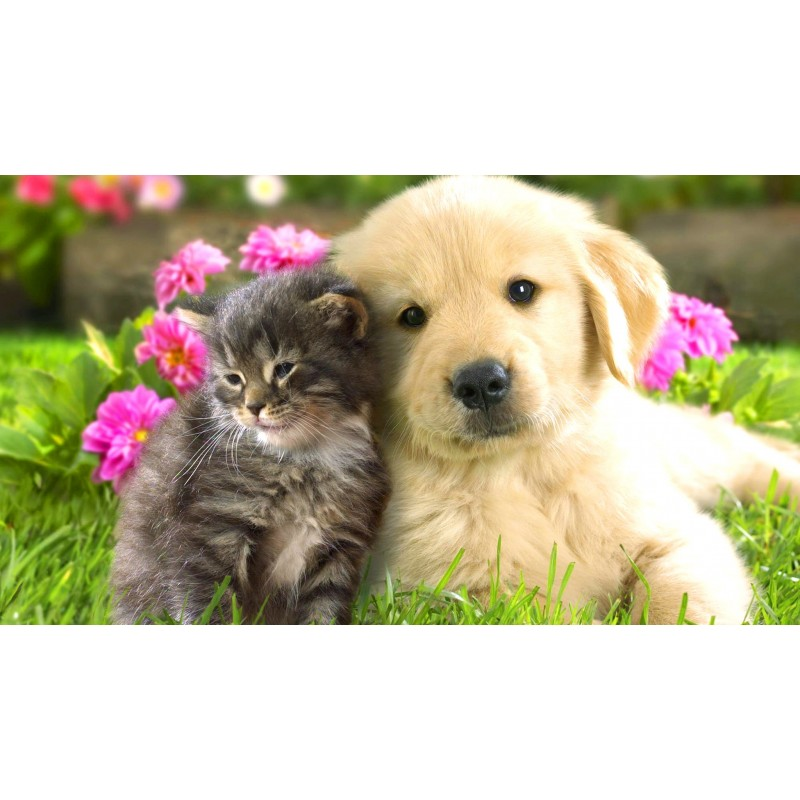 Cute Cat and Dog 5D ...